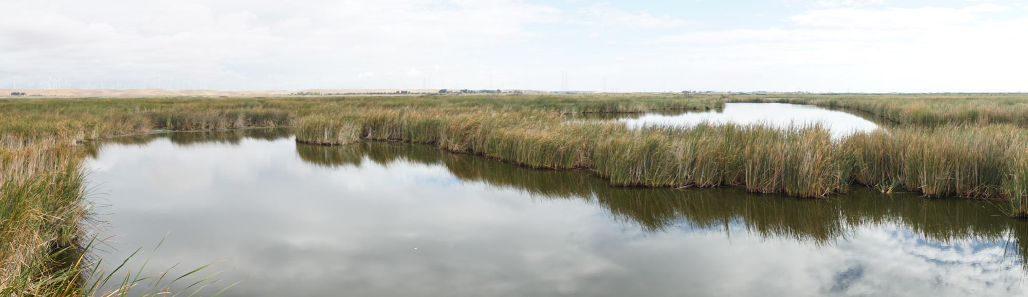 View of delta with water and grasses