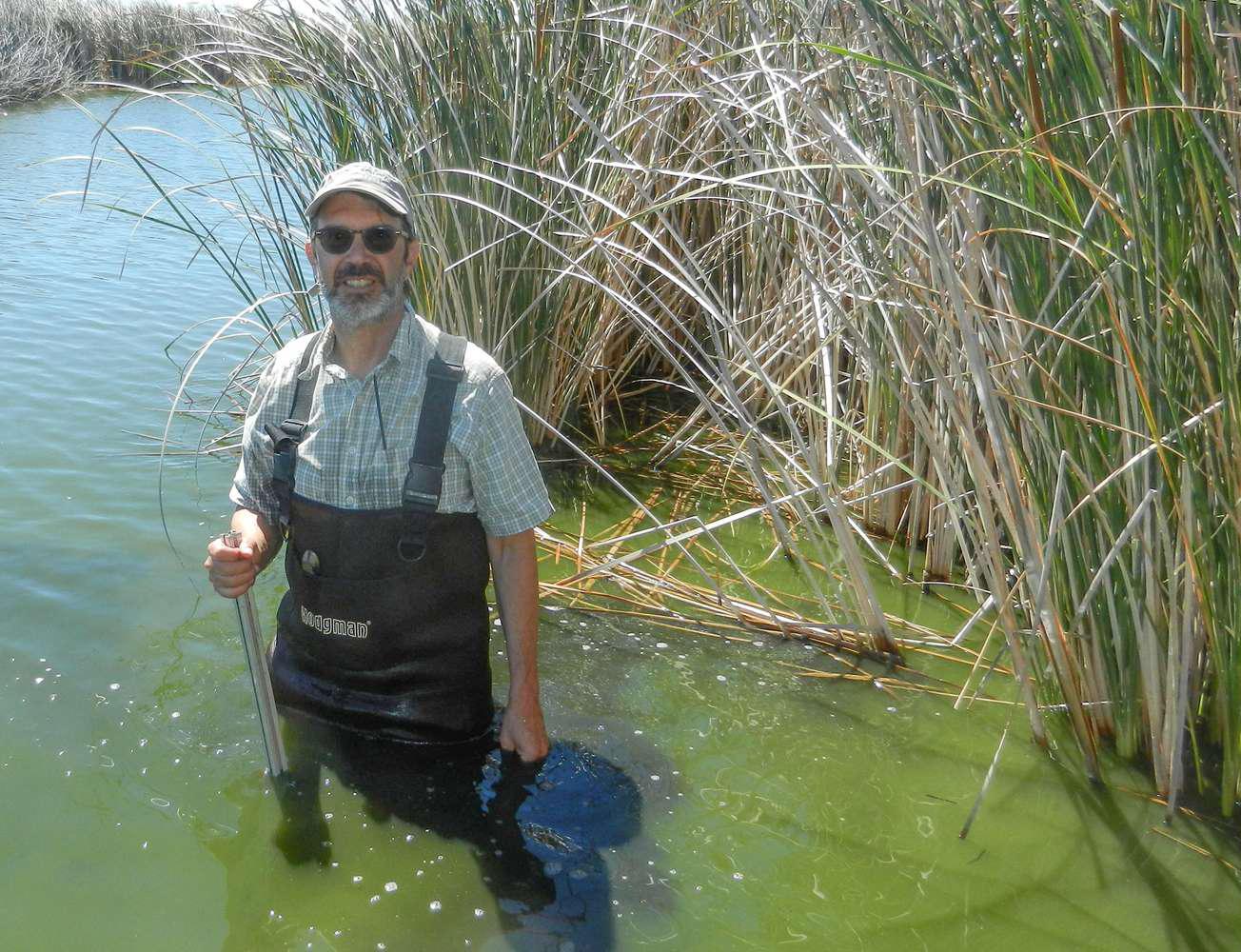 Dennis Baldocchi wades through a restored wetland at a research site in the Sacramento-San Joaquin River Delta.