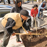 Timothy Hudson, left, of Oakland's Urban Releaf, worked with volunteers to plant a tree on October 25, 2012. The urban-forestry organization addresses the needs of communities that have little to no greenery or tree canopy.