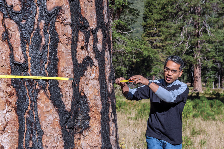 Gonzalez measures a ponderosa pine at Yosemite National Park.