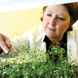 Mary Wildermuth, associate professor of plant and microbial biology, in her lab. PHOTO: Peg Skorpinski