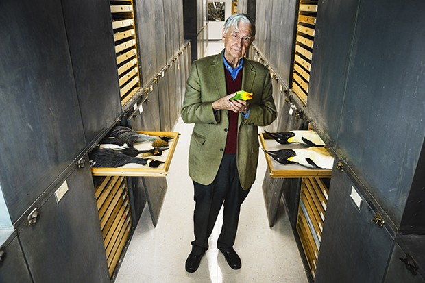 "On a recent visit to UC Berkeley's Museum of Vertebrate Zoology, E. O. Wilson held a specimen of the southern-dwelling Carolina parakeet, which went extinct in the early 1900s due to human factors like deforestation and the millinery trade. The emperor penguin, right, was listed as ""near threatened"" in 2012 by the International Union for the Conservation of Nature (IUCN) and, along with nine other species of penguin, is currently under consideration for inclusion under the Endangered Species Act due to the effects of climate change and industrial fisheries. Also in 2012, the IUCN uplisted the grey crowned crane, left, from vulnerable to endangered. It is threatened by the degradation of wetland breeding areas due to the use of agricultural pesticides and to drought-related changes in land use."