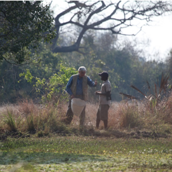 Top: Wilson and his regular collecting companion, Tonga Torcida, in Gorongosa National Park, in Mozambique. PHOTO: Jay Vavra, courtesy of the E. O. Wilson Biodiversity Foundation
