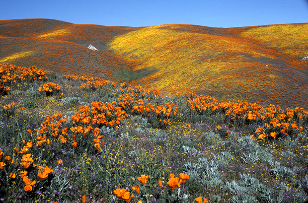 Antelope Valley California State Natural Poppy Reserve