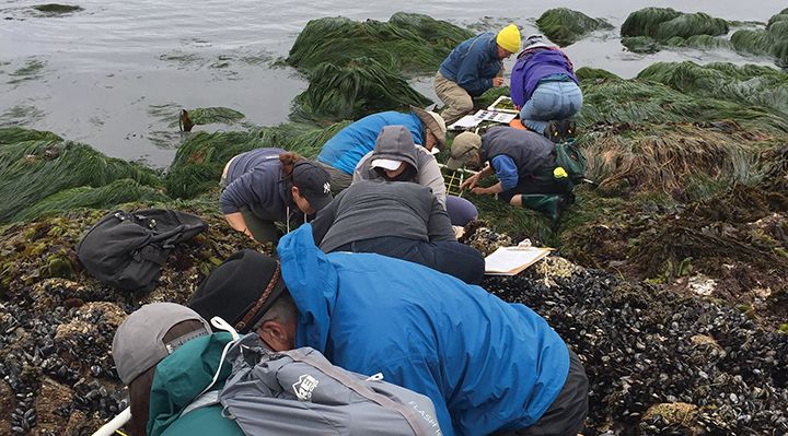 Volunteers count organisms in a tide pool