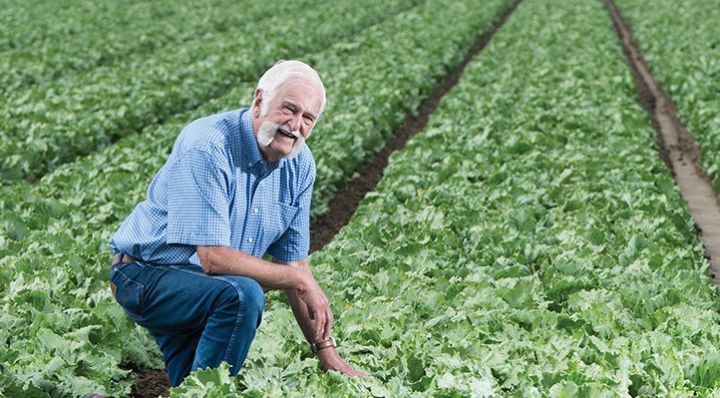 Jim Lugg in a lettuce field