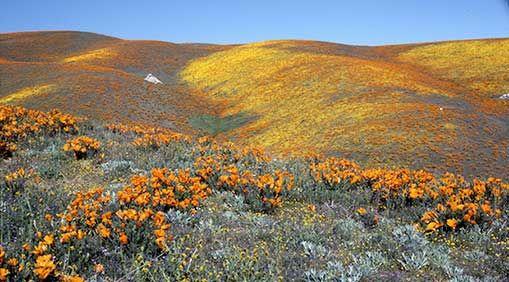Rebooting California's Parks