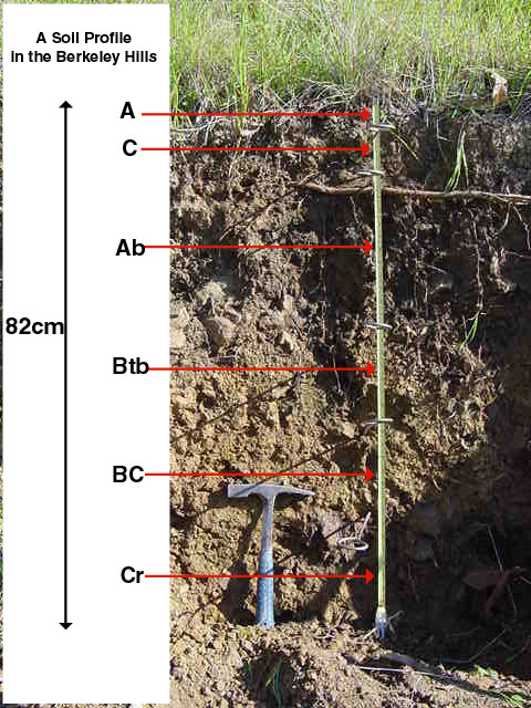 A soil profile at berekely hill for Soil forming factors