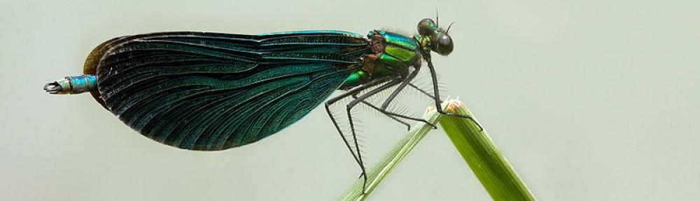 Entomology Students Organization