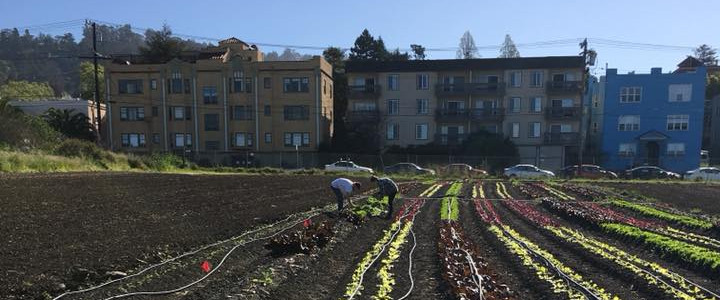 Regenerating Soils
