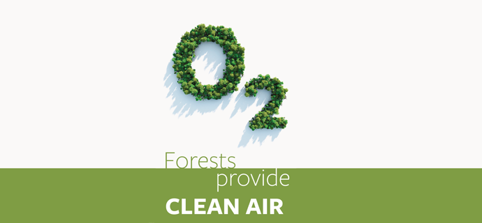 Forests Provide Clean Air