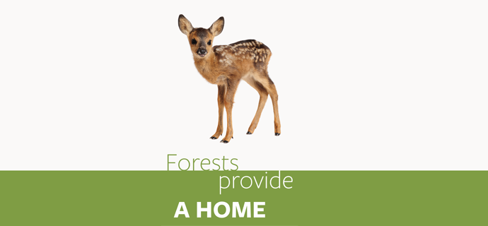 Forests Provide A Home
