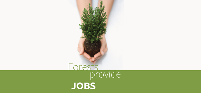 Forests Provide Jobs