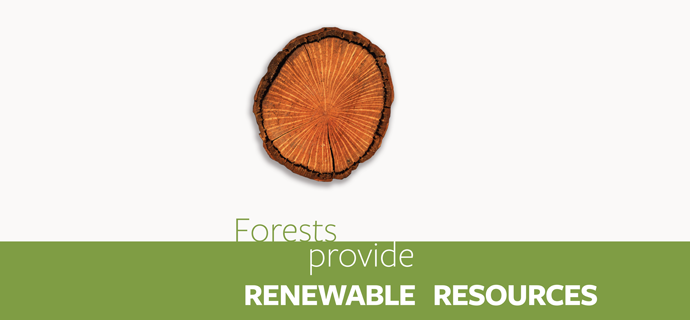 Forests Provide Renewable Resources