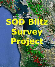 SOD Blitz Survey Project