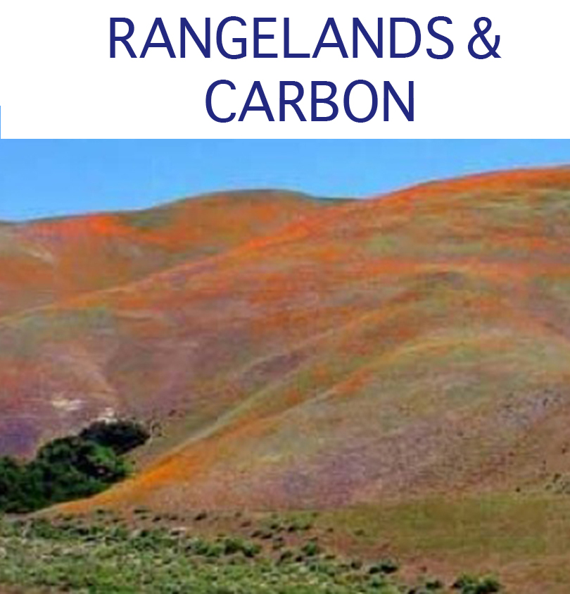 rangelands and carbon