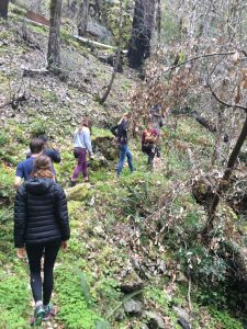 6 people hike up wooded hillside with backs to camera