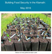 Image of fruit trees linked to May 2016 Food Security Newsletter