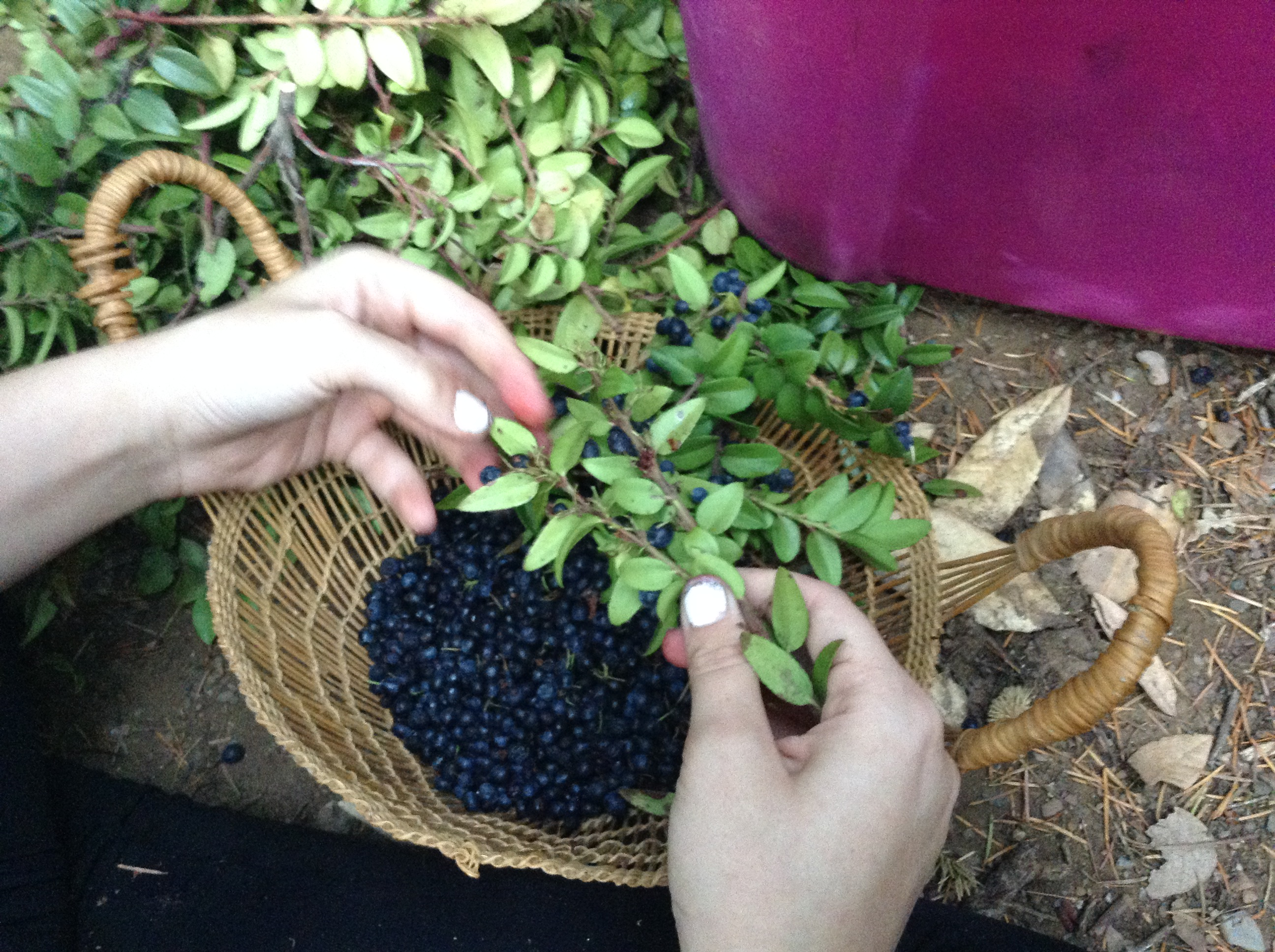Managing Cultural Foods