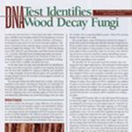 Wood Decay Diagnostic