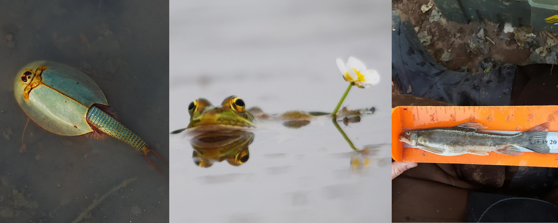 Freshwater biodiversity conservation