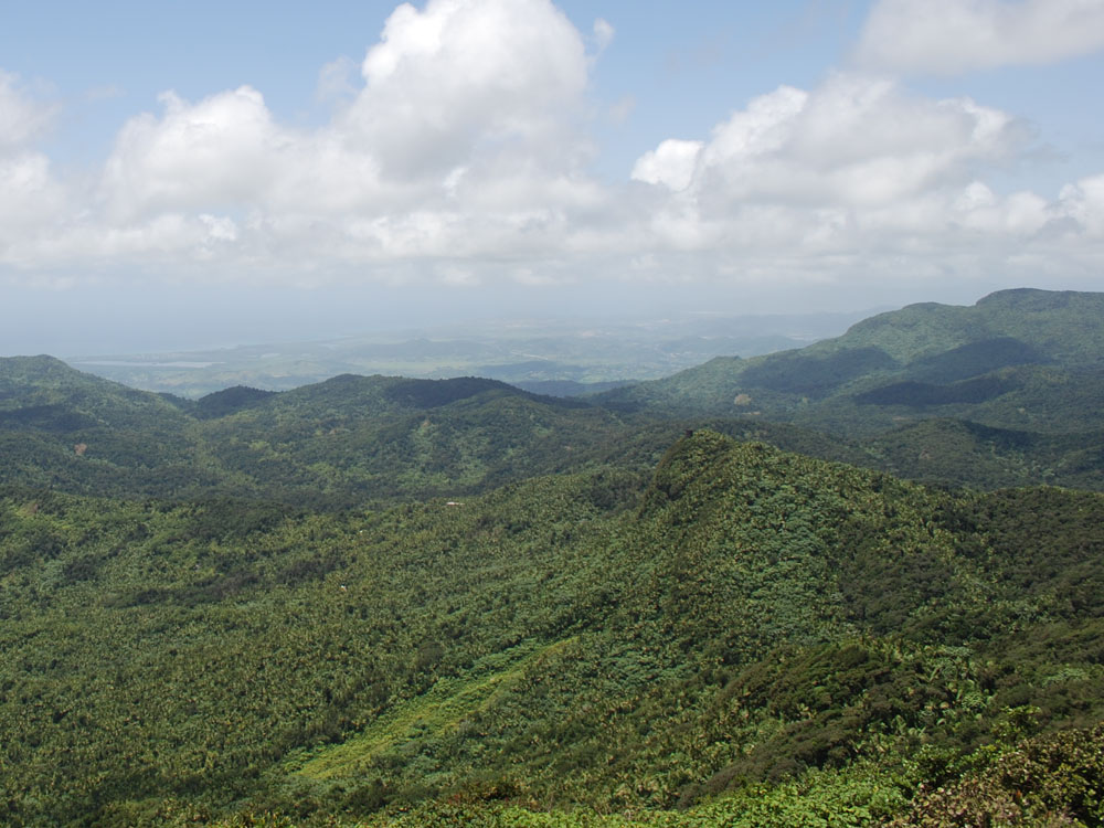 Greenhouse Gas Dynamics in Tropical Forests