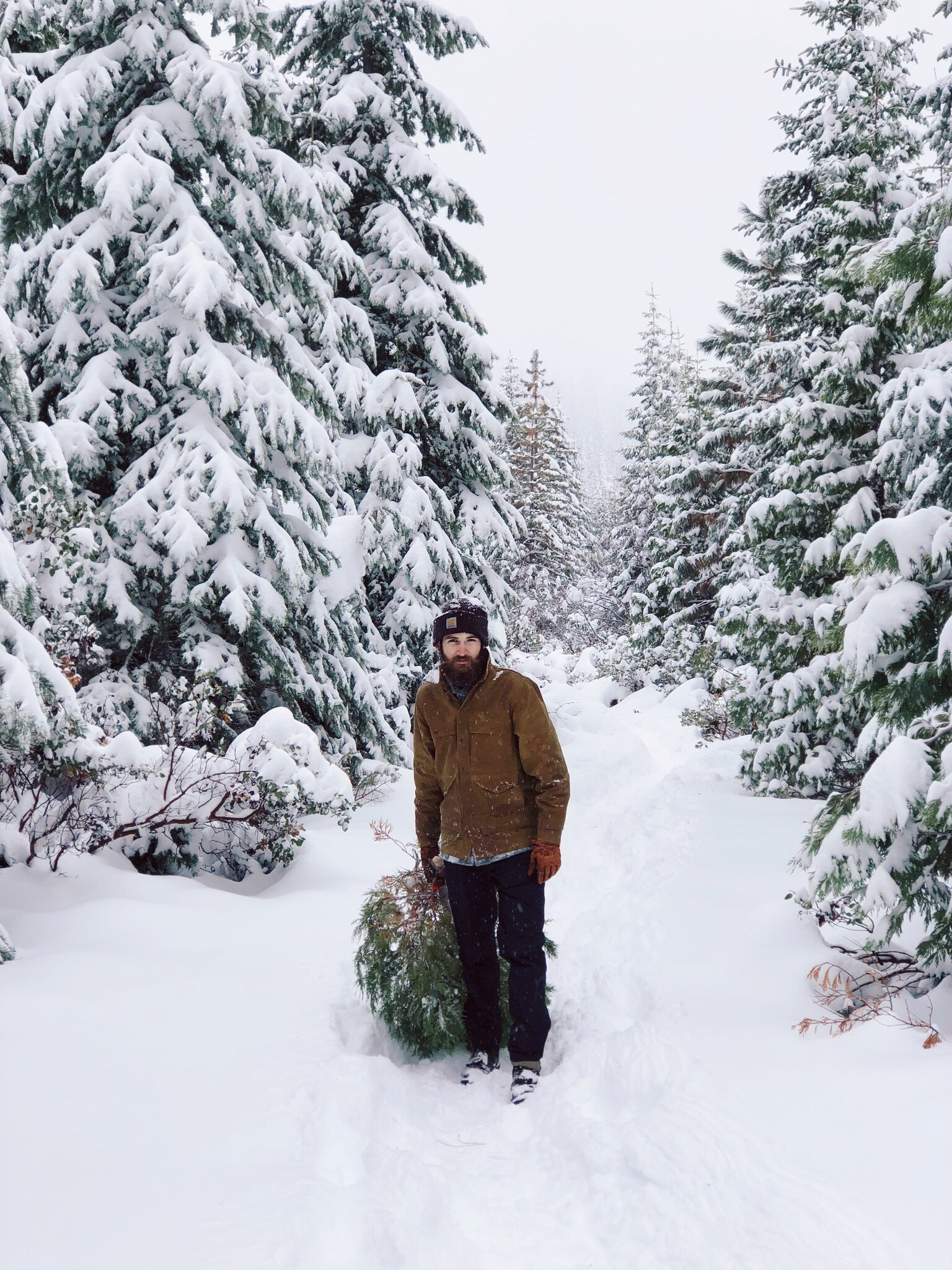 A man dragging an evergreen tree in a very snowy forest