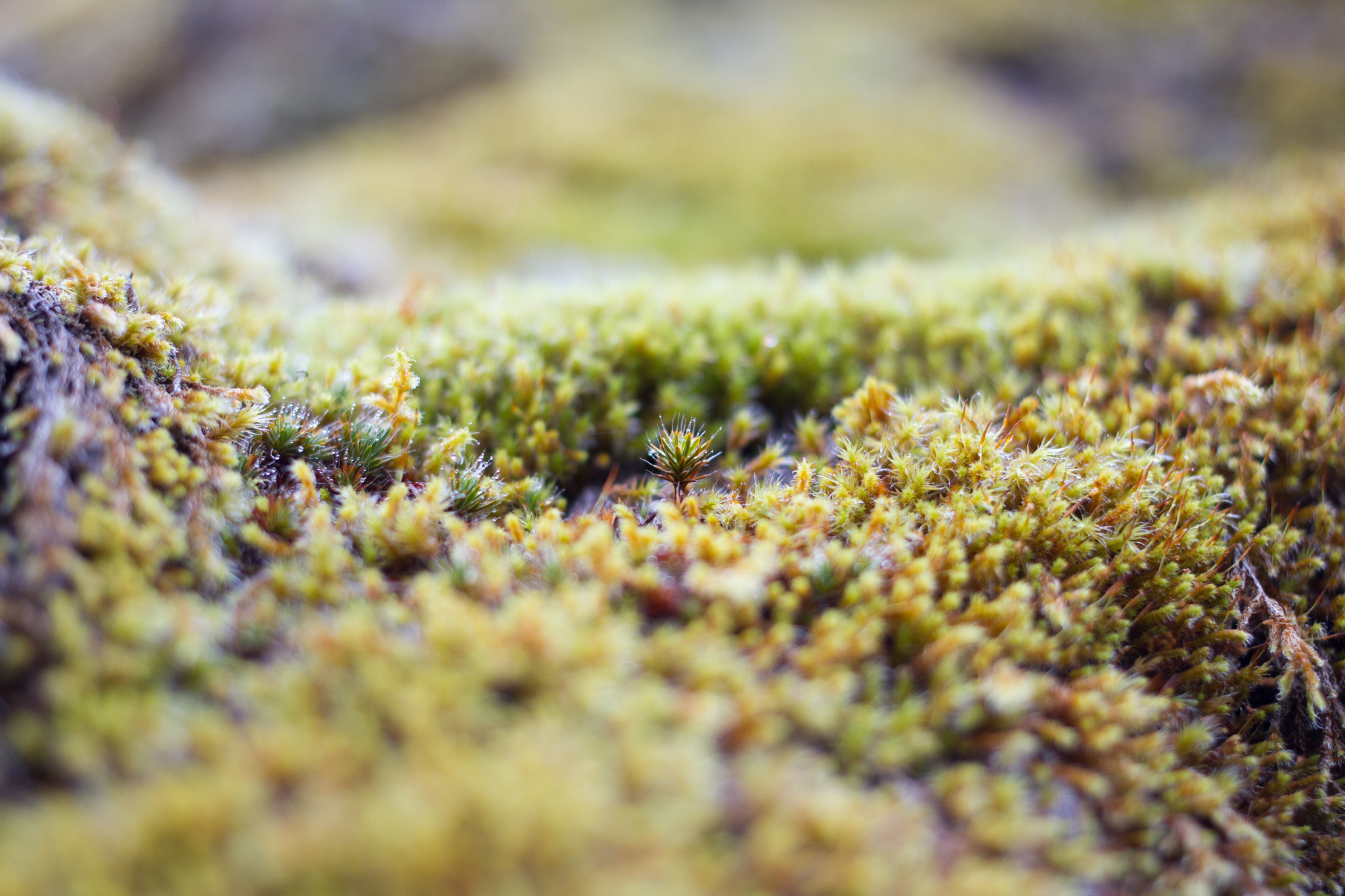 A very close up image of moss