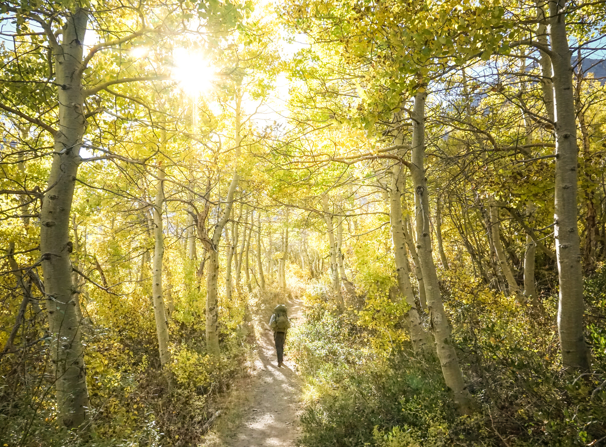 A backpacker walking through a forest of aspen trees with golden leaves