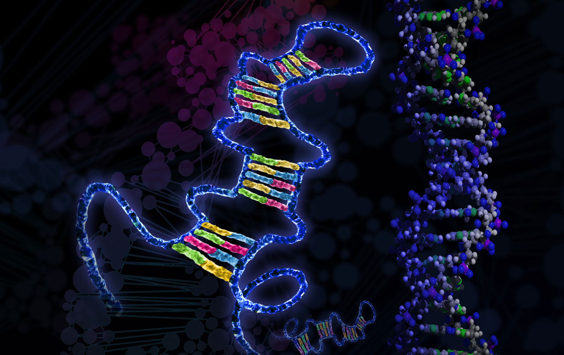 Researchers discover link between microRNA and metabolic disorders