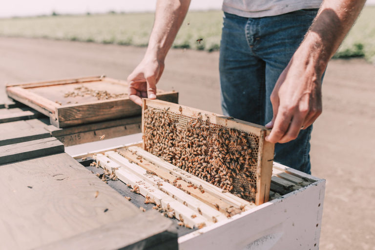 Colin devotes much of his time tending to the farm's honey bee hives.