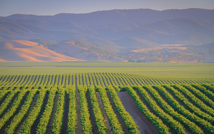 Photo of Central Coast vineyards.