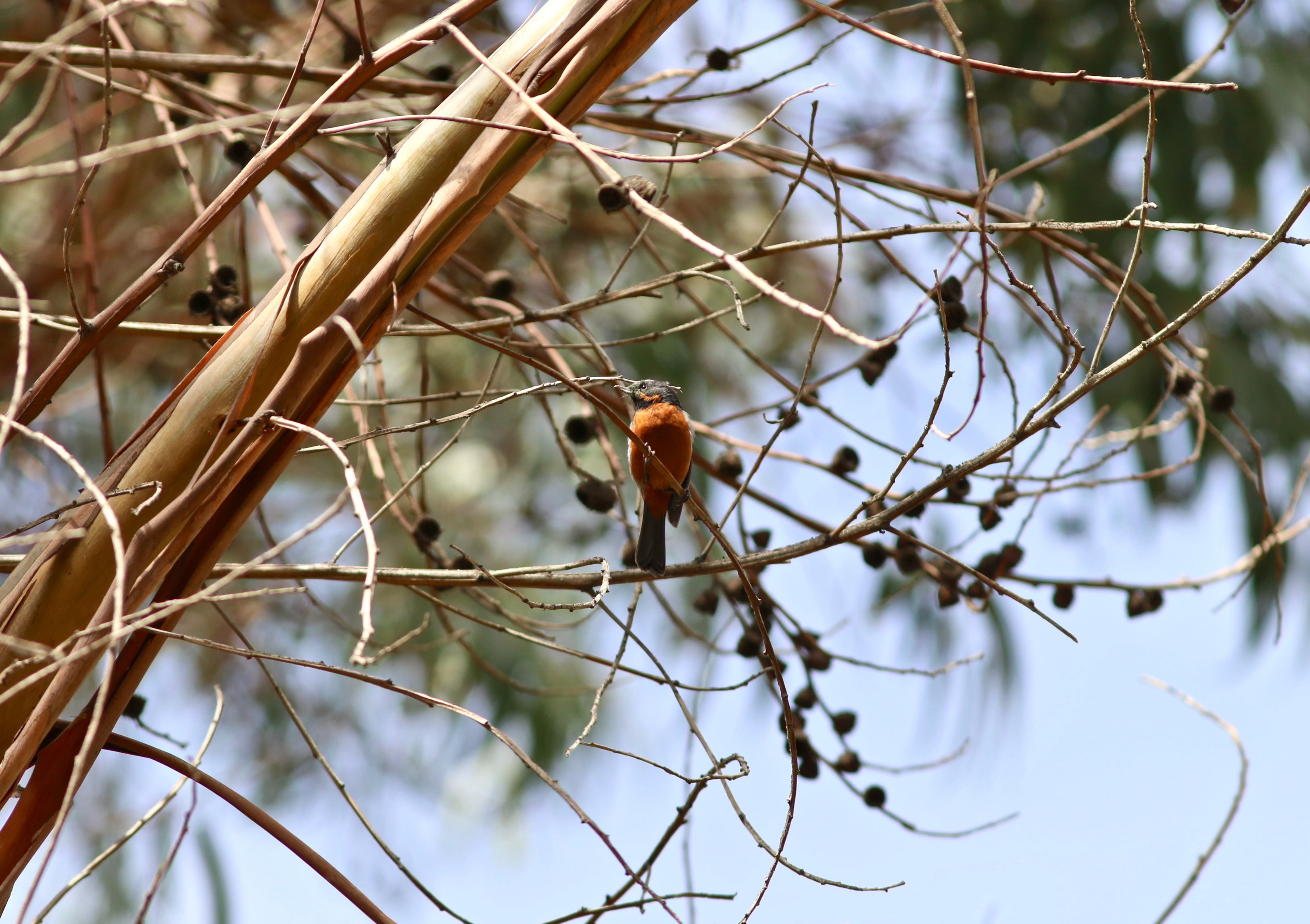 Photo of a bird in a tree.