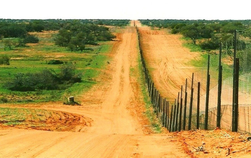 Dingo fence on landscape.