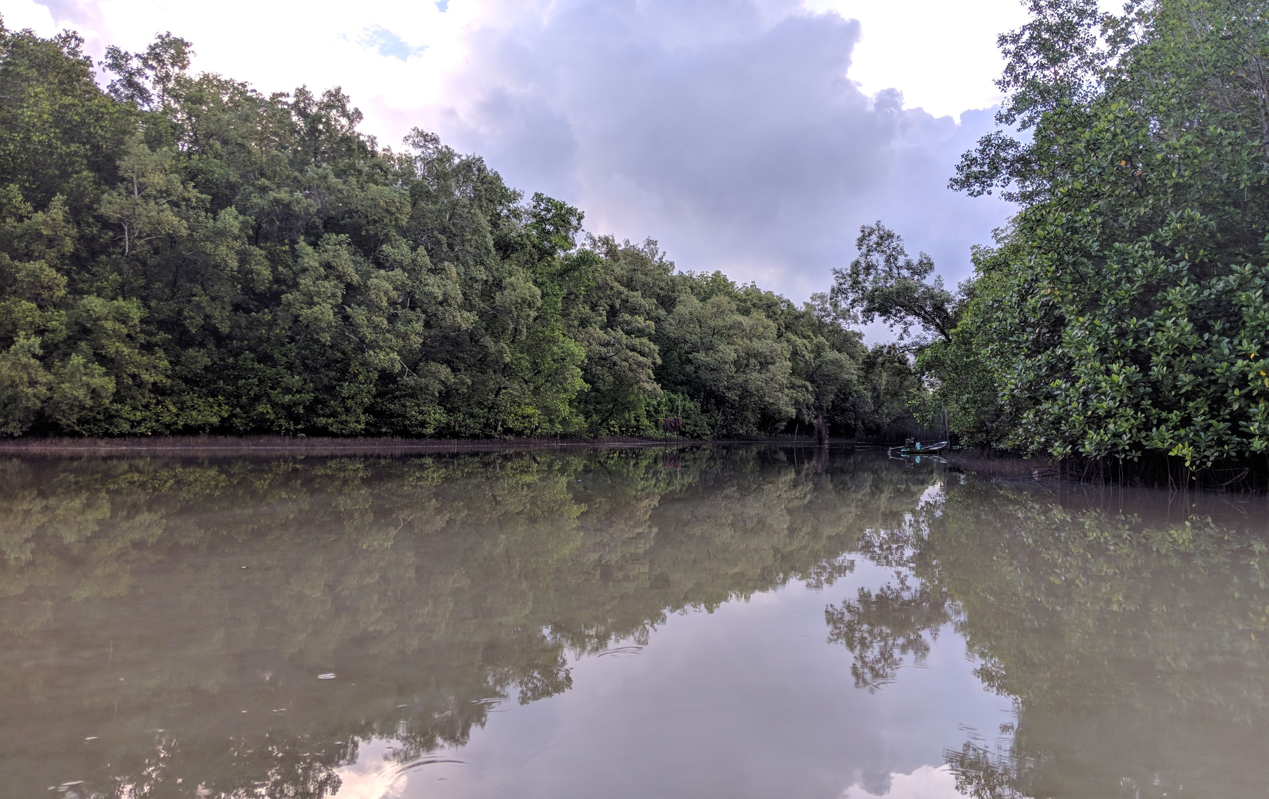 Trees and water in a mangrove.