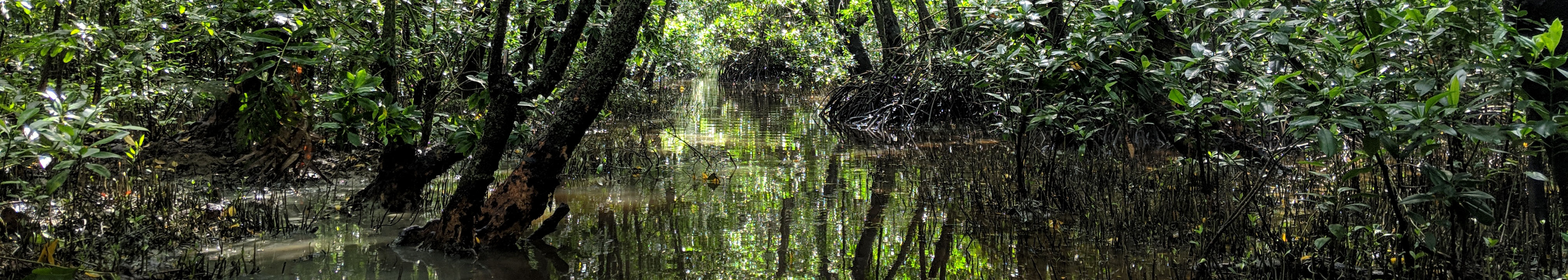 Jungle with water on the floor.
