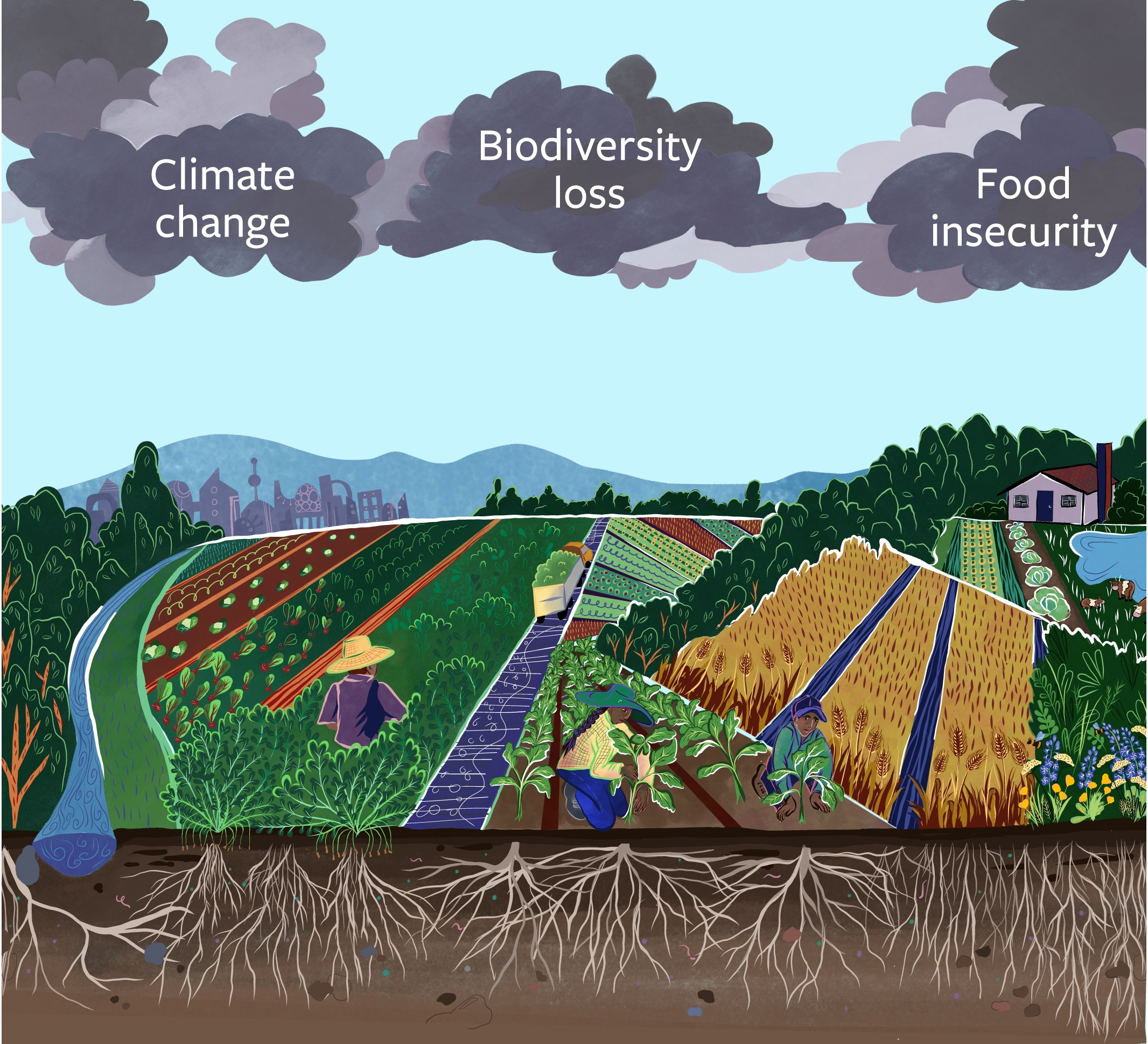 "Graphic showing cross section of landscape with soil and plants, with clouds above saying ""Climate change"" ""Biodiversity loss"" and ""Food insecurity"""