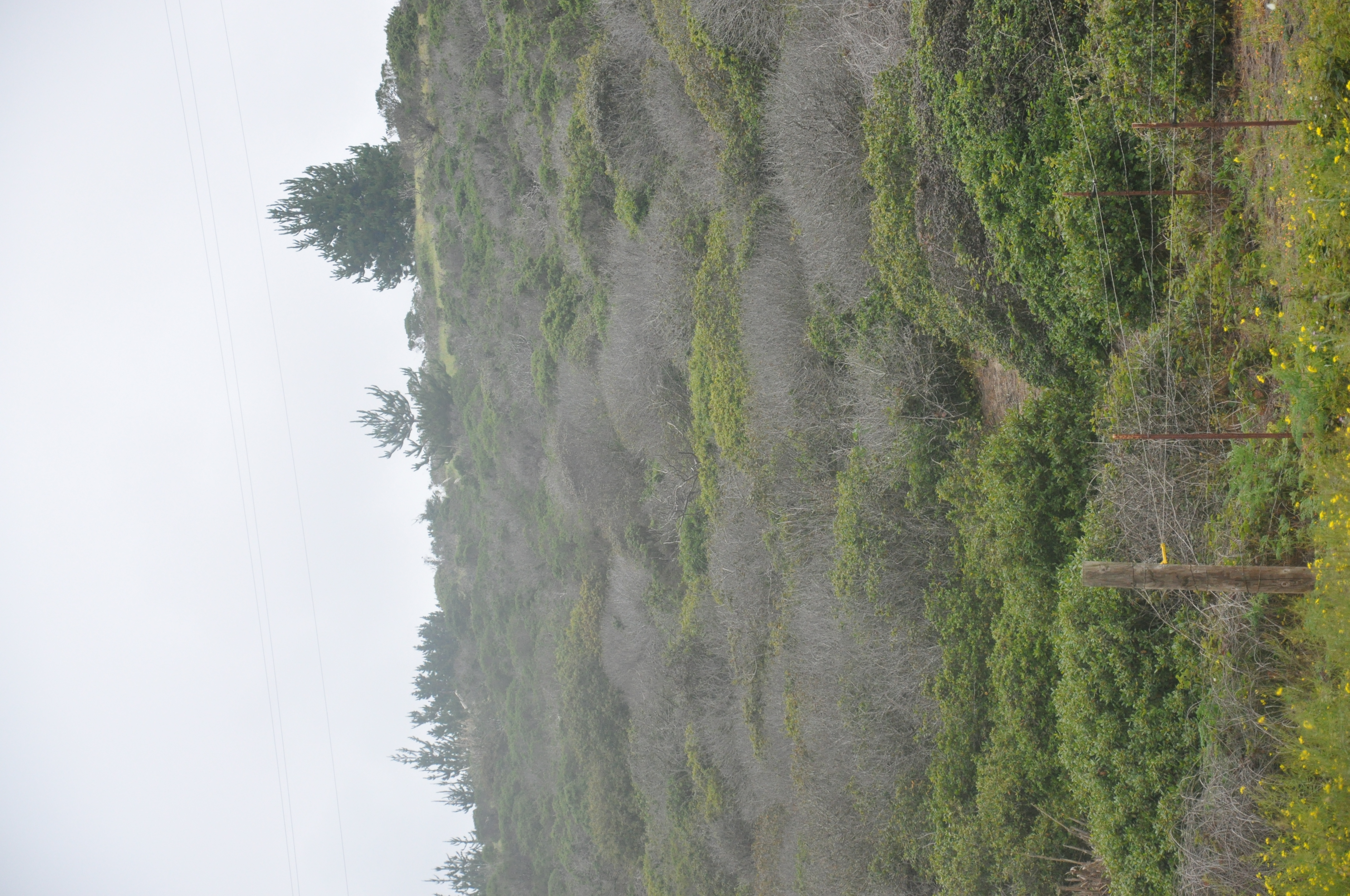 Dead trees among live trees