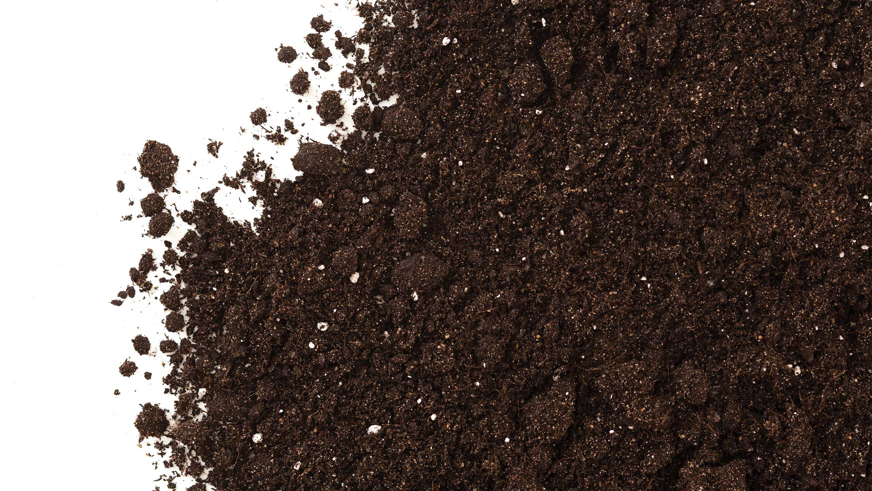soil scattered acoss a white background