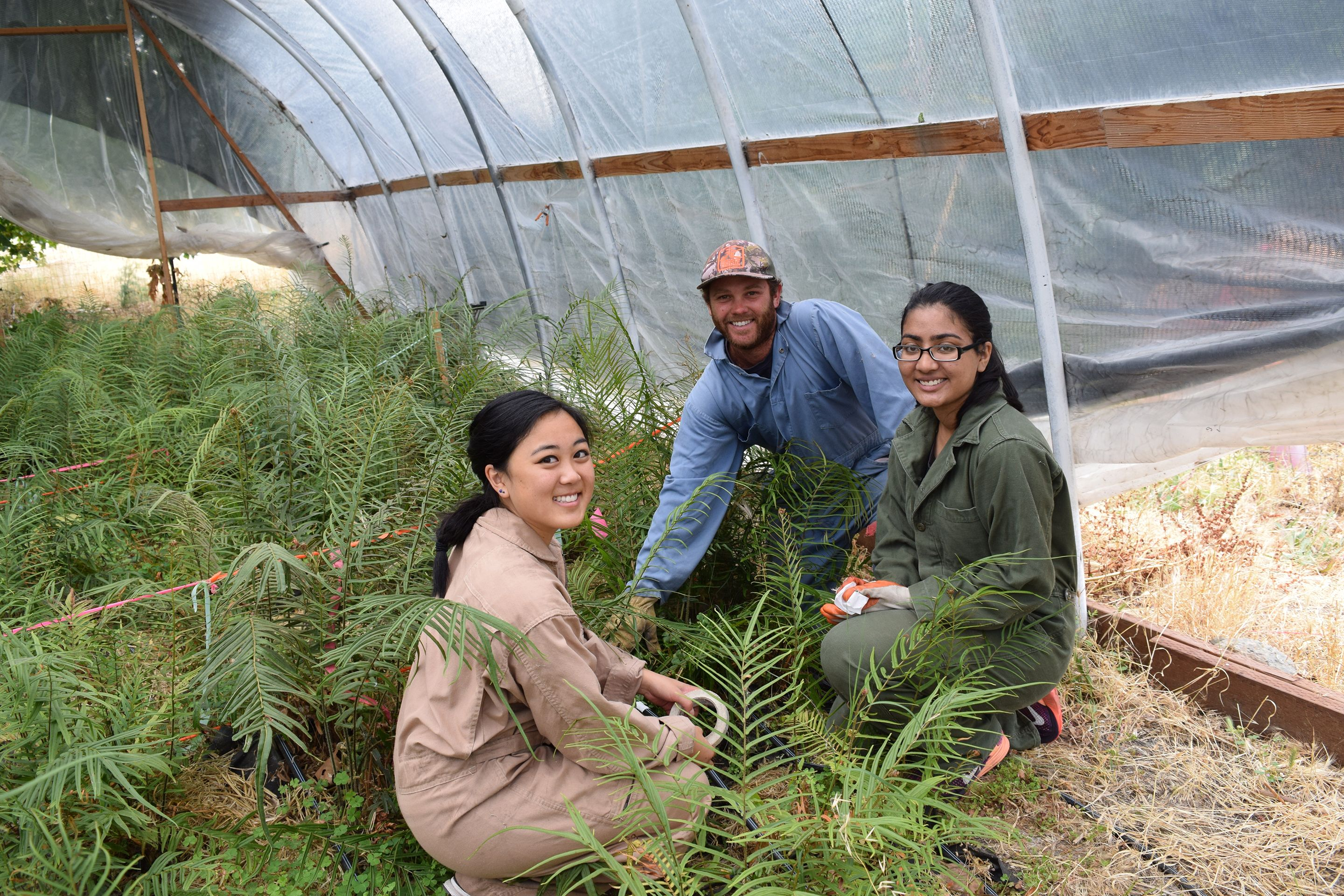 Student researchers in a greenhouse