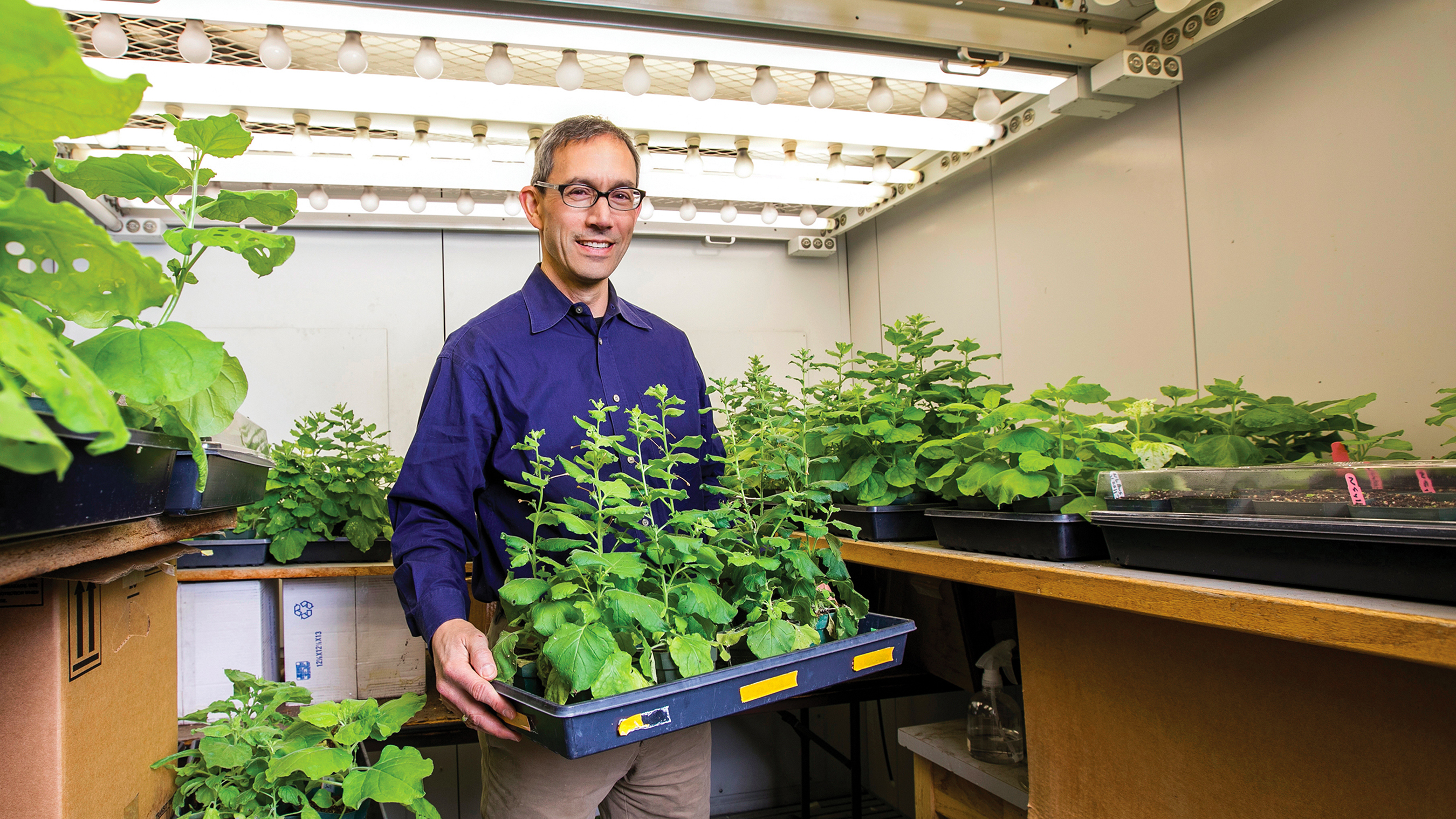 Researcher Kris Niyogi with research plants
