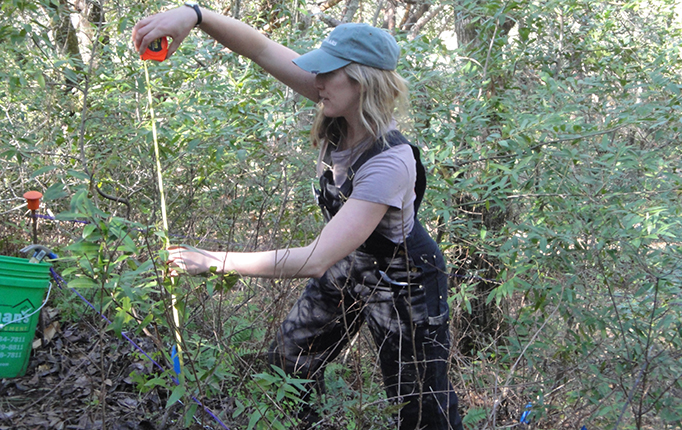 Coauthor Meagan Oldfather measures saplings in a research plot at Pepperwood Preserve. Photo by Michelle Halbur.