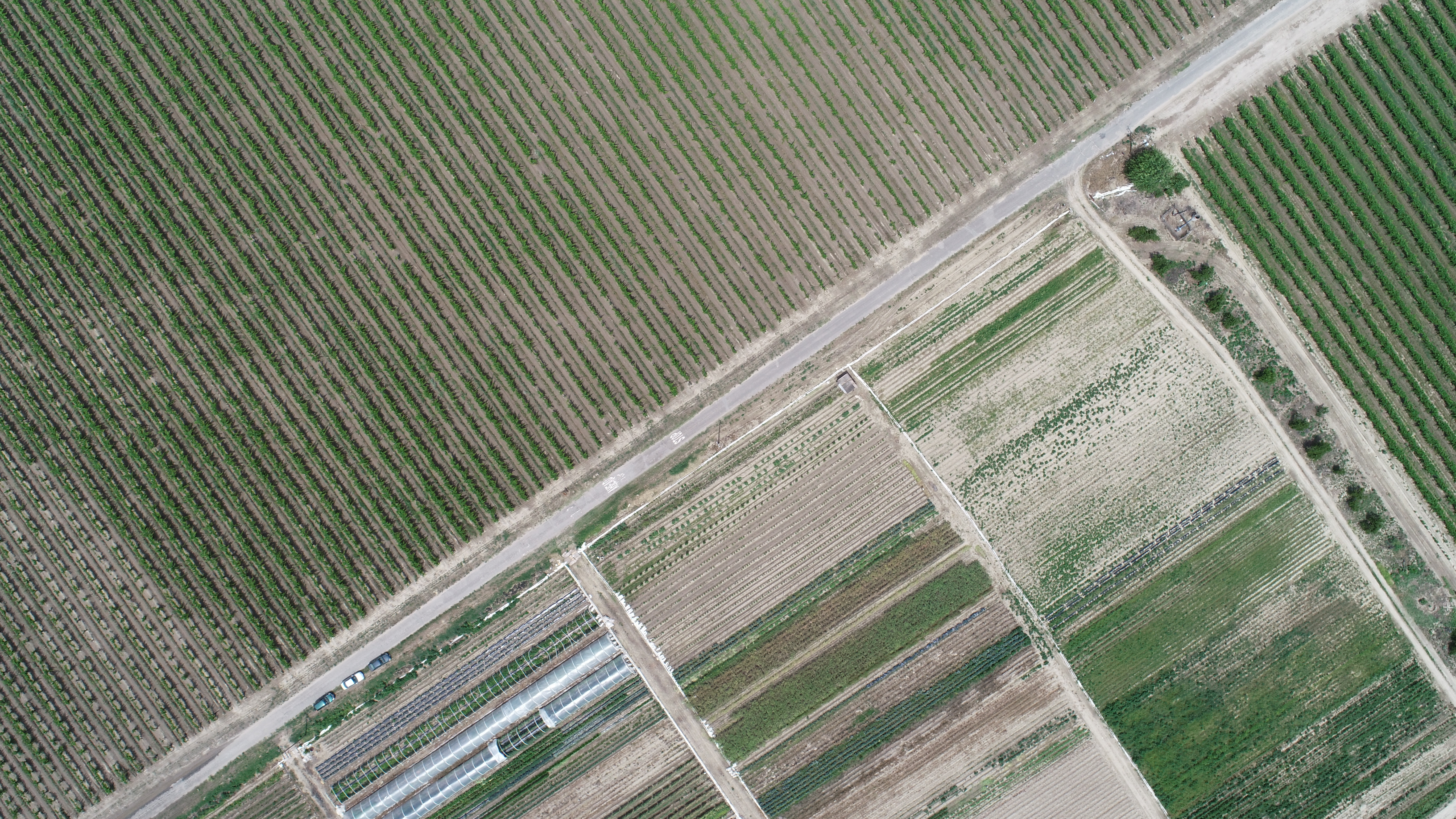 aerial image captured by a drone shows the visual differences between polyculture and monoculture farms