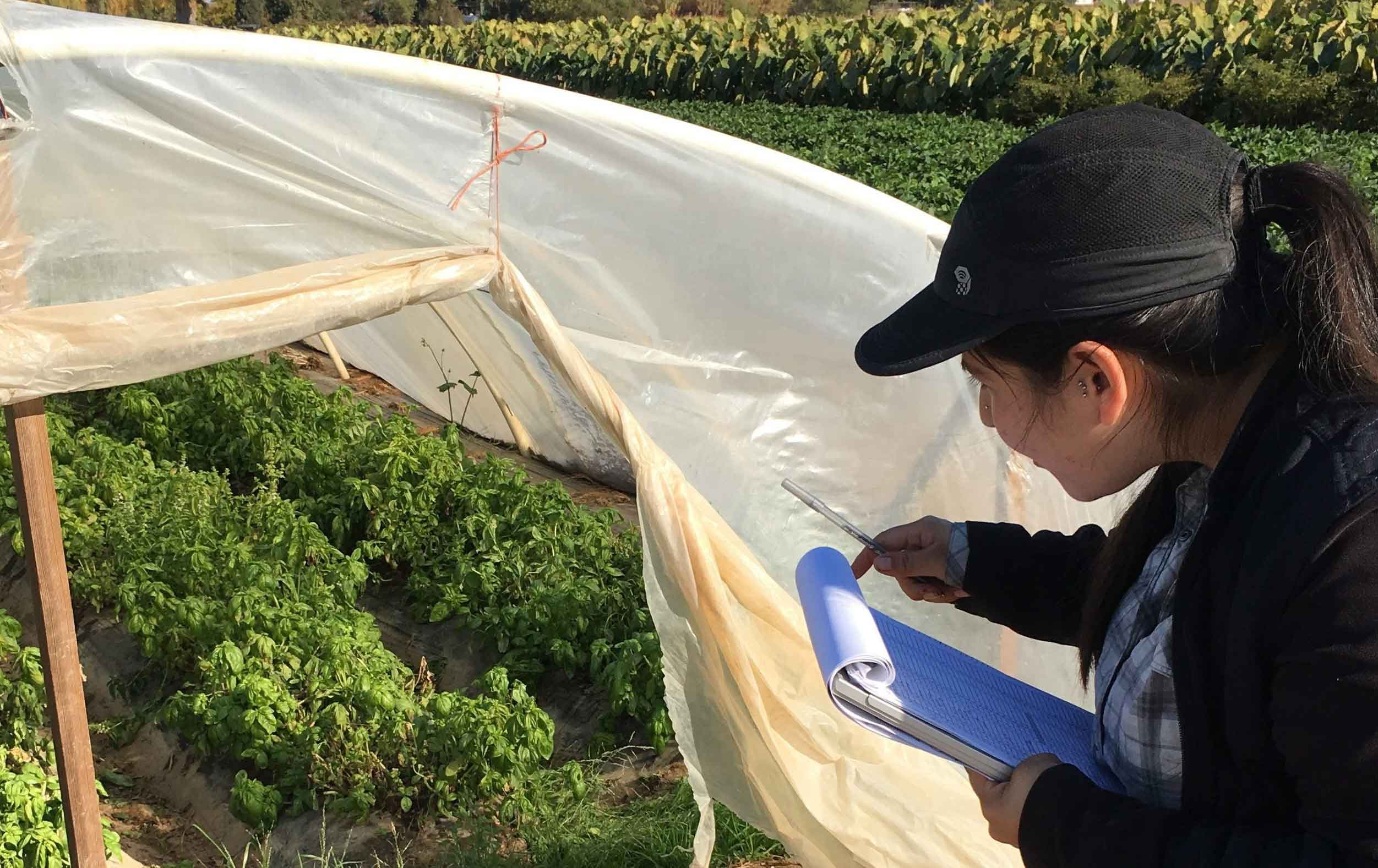 A woman holds a clipboard and looks into a greenhouse