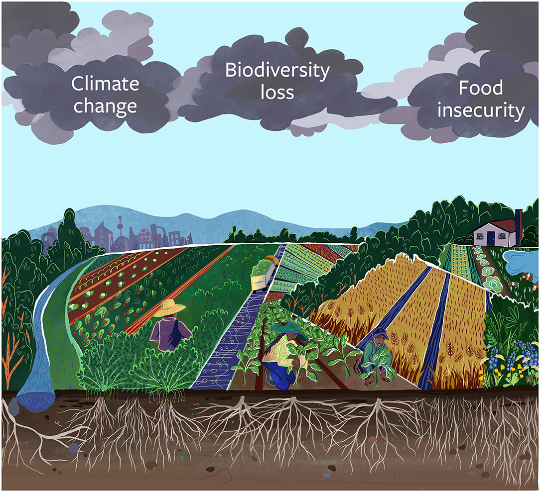 Graphic of diversified farming and triple threat from climate, biodiversity loss, and food insecurity
