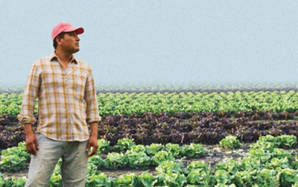 a farmer standing in a field