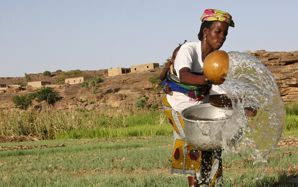 Dogon Woman in Mali waters her onion garden