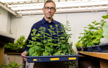 Image of researcher holding research plants