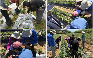 Students garden to save the world,