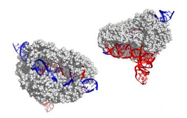 CasX gene editor